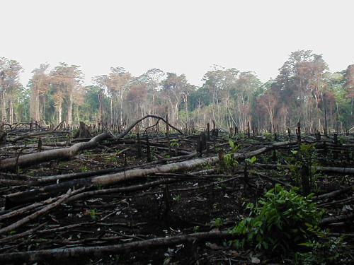 A large patch of rainforest has been burned to the ground in Lacanja, a region in southern Mexico. Why? So that the land can be used for animal agriculture • Photo by Jami Dwyer • Public-domain photo courtesy of Wikimedia Commons • https://commons.wikimedia.org