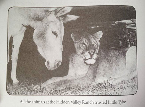 All the animals at the Hidden Valley Ranch trusted Little Tyke
