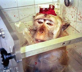 "Click here to visit Occupy for Animals, then click ""Research"" at the top for more information, as well as gruesome images and video"